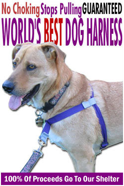 Worlds Best Dog Harness